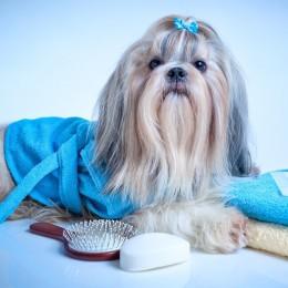 AmiWet szampon dla Shih Tzu / szampon dla psa Shih tzu 200ml