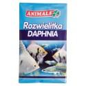 Rozwielitka suszona Daphnia pokarm dla ryb