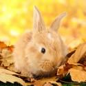 Dla królika