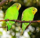 Dla ptaków egzotycznych