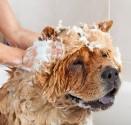 Szampony dla psów