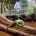 Oświetlenie do terrarium