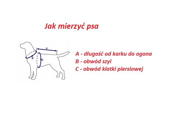 jak mierzyć psa?